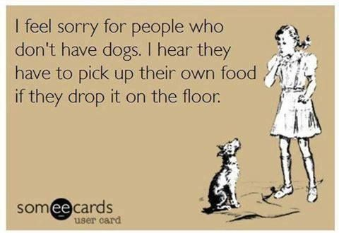 Feel sorry for people without dogs.