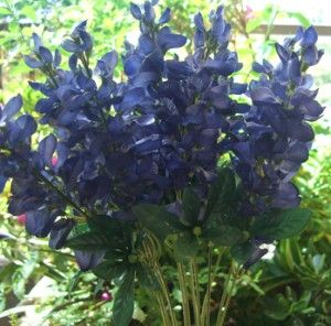 Texas Silk Bluebonnets  Box of 12 for 588 would definitely love these for centerpieces and