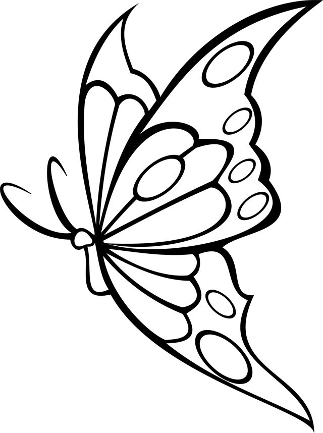 32 best images about dessin insectes papillons on