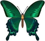 3466 butterfly's