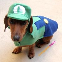 17 Best images about Dog costumes on Pinterest | Dogs in ...