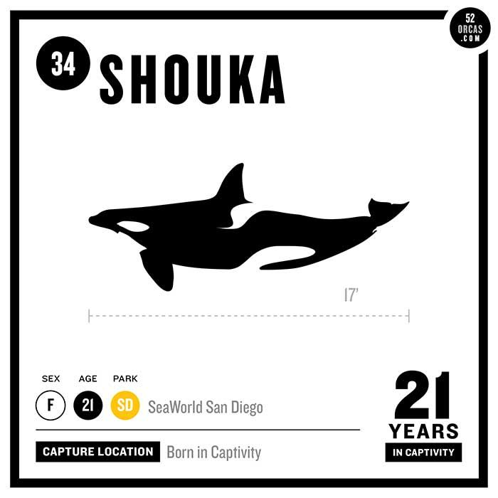 34. Shouka Shouka was the first orca born in captivity at