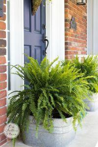 25+ best Front Porch Plants ideas on Pinterest | Fuller's ...
