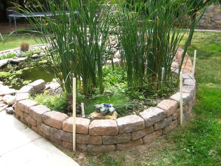 Natural Pond Filter Plants