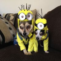 This is so cute! Dogs Minion Halloween costumes! | Animals ...