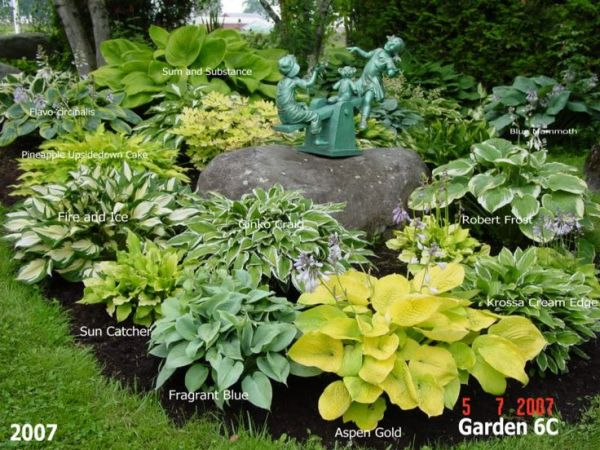 25 Landscaping With Hostas Sedum Pictures And Ideas On Pro Landscape