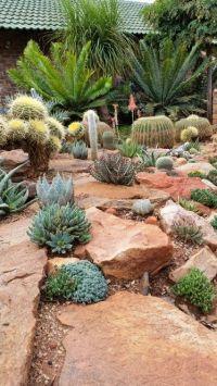 436 best Desert landscaping ideas images on Pinterest