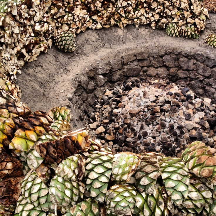 Wood stove cooking Natural Process of Maguey Agave