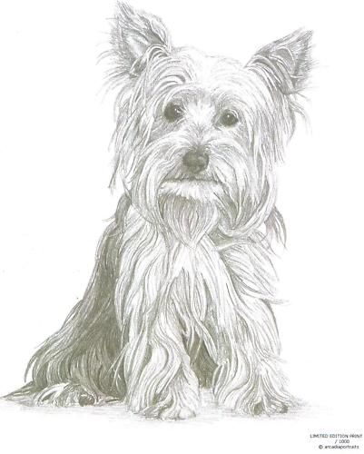 YORKSHIRE TERRIER (1) Yorkie dog Limited Edition pencil