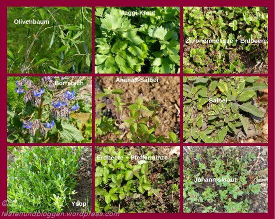 Krauter Pflanzen Hochbeet