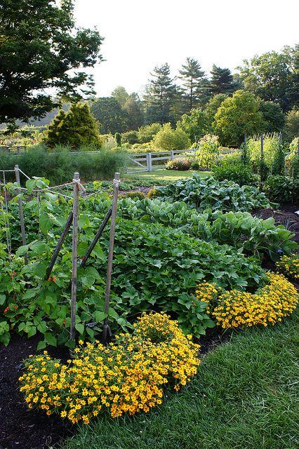 218 Best Images About Vegetable Garden Ideas On Pinterest