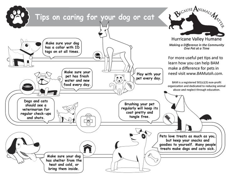 13 best images about Pet Care & Best Tips on Pinterest