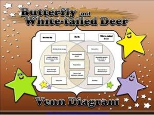Whitetailed Deer and Butterfly Life Cycles Venn Diagram