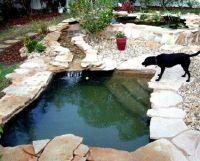 Best 25+ Dog Pond ideas on Pinterest