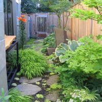 Dog friendly landscaping pictures, pacific northwest ...