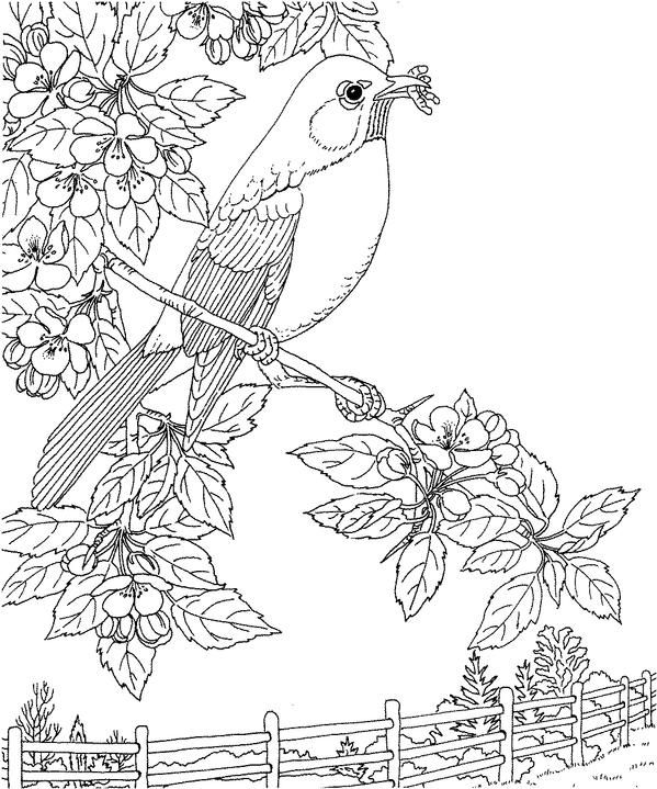 168 best images about Coloring Pages on Pinterest