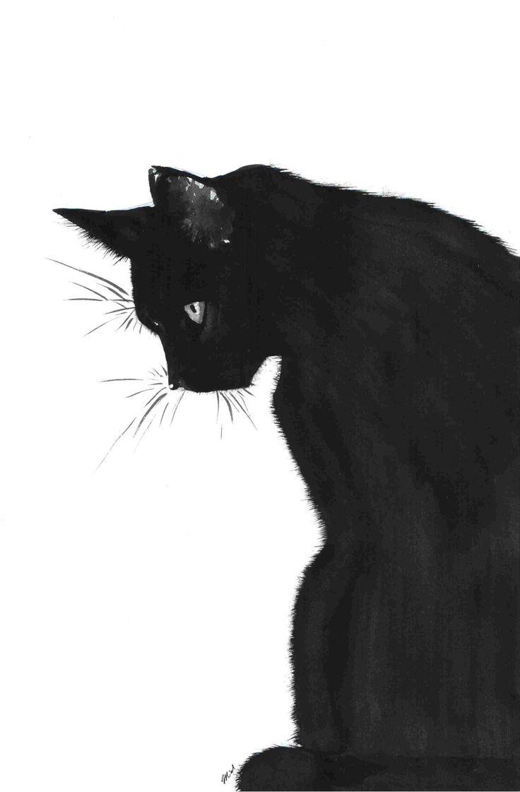 638 best a cats got me 13 images on pinterest