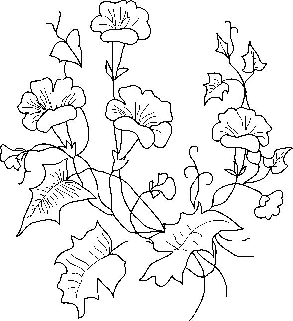 415 best images about Drawing: Flowers on Pinterest