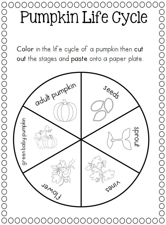 Pumpkin life cycle craft and poster. http://www
