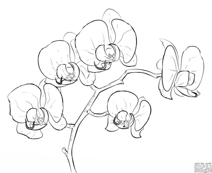 The Mega List Of Floral Drawing Tutorials