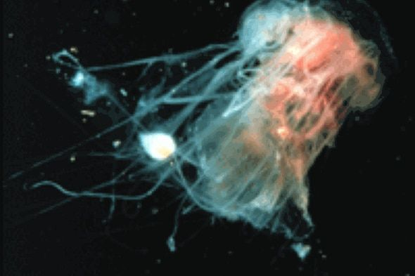 1000+ Ideas About Jellyfish Sting On Pinterest