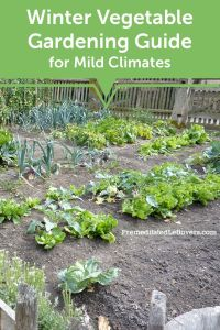 17 Best ideas about Winter Vegetable Gardening on ...