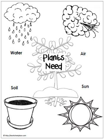 Bilingual education, Plants and Education on Pinterest