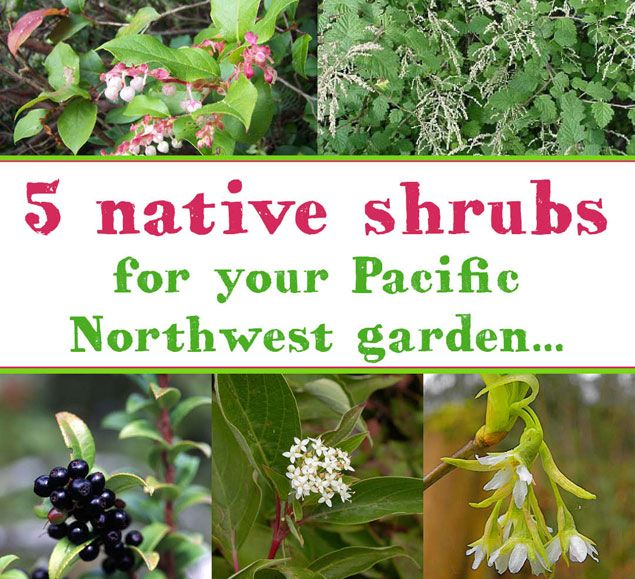 51 Best Images About Pacific Northwest Native Plants On Pinterest