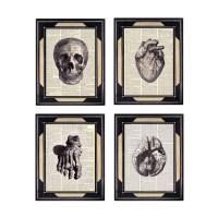 ANATOMICAL EAR Art print Wall decor human anatomy medical ...
