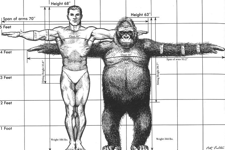 A comparison of the height, weight, and arm-span of a