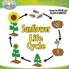 Sunflower Plant Life Cycle Diagram Basic Car Electrical Wiring Diagrams Of A - Google Search | Fun For Kids Pinterest Cycles, Science And ...