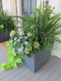 Outdoor planter with ferns | Exteriors | Pinterest ...
