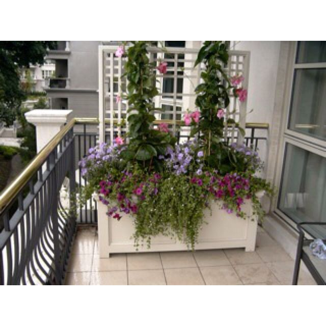 174 Best Images About Urban Garden Balcony On Pinterest