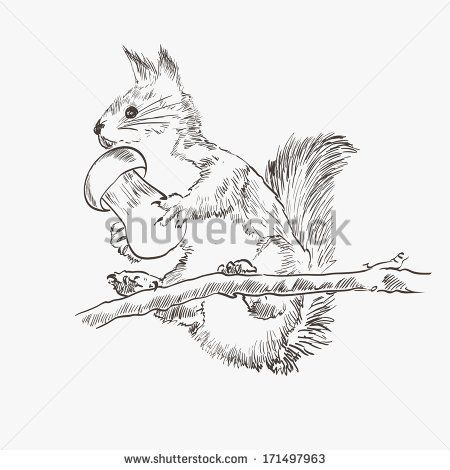 284 best images about SQUIRRELS- SKETCHES on Pinterest