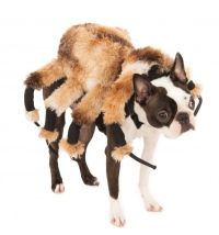 25+ best ideas about Dog Spider Costume on Pinterest ...