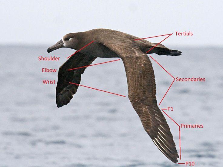 Chicken Wing Bone Diagram