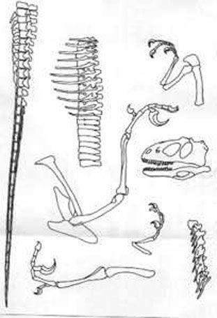 1000+ images about K-1 Dinosaur Unit on Pinterest