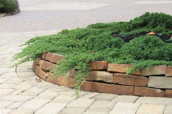 juniper green mound