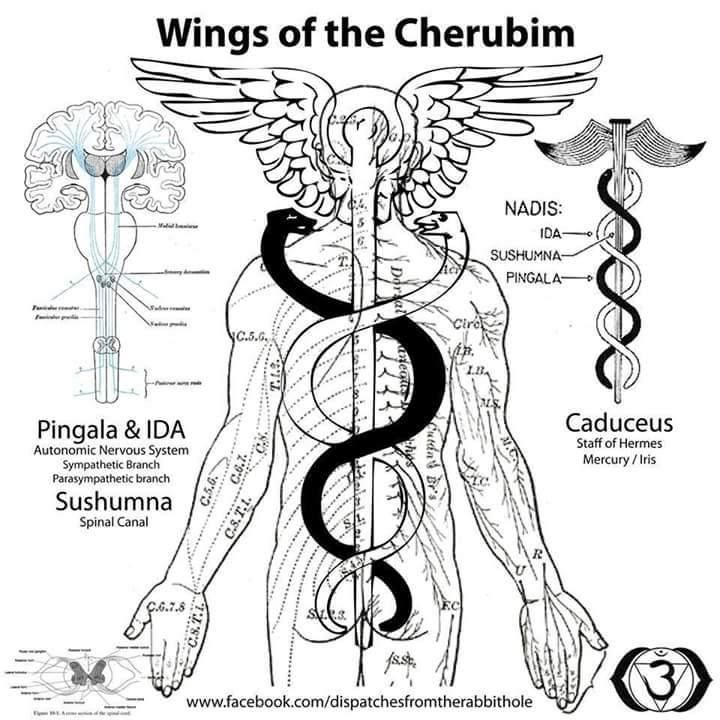 67 best images about The Kundalini Serpent Energy. on