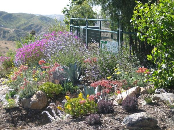 gardens drought resistant landscaping