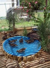 """Added a hole in the kiddy swimming pool, and put in a ..."