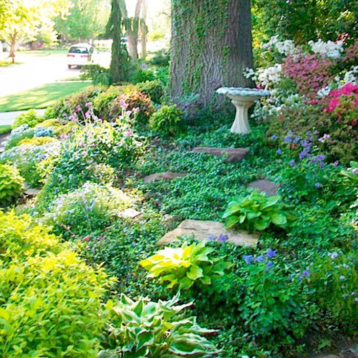 25 Best Ideas About Shade Landscaping On Pinterest Shade Garden