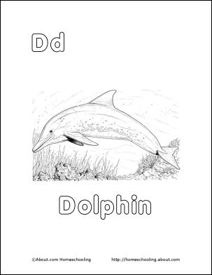 1000+ images about Dolphin Unit Study on Pinterest