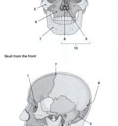25 best ideas about skeleton labeled on pinterest human skeleton labeled body bones [ 647 x 1288 Pixel ]