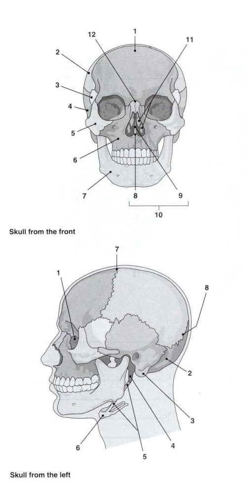 small resolution of 25 best ideas about skeleton labeled on pinterest human skeleton labeled body bones