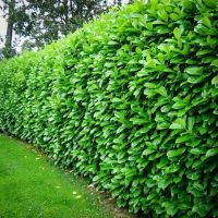 25+ best ideas about Fast growing trees on Pinterest ...