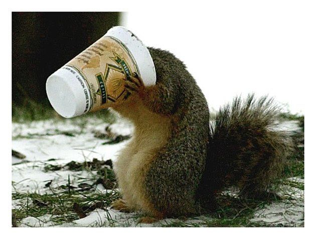 17 Best images about Animals Love Coffee Too on Pinterest ...