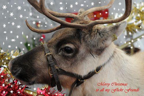 1000 Ideas About Santa Clauss Reindeer On Pinterest