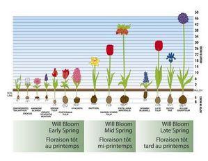 340 Best Images About Secret Garden On Pinterest Spring Bulbs