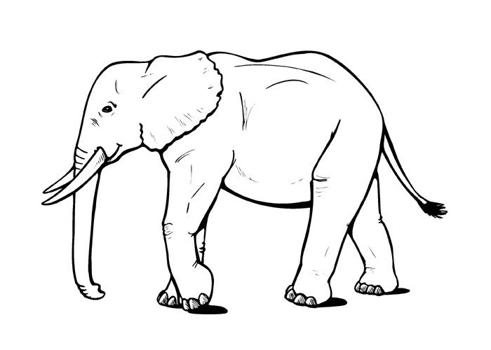 47 best images about Elephants on Pinterest